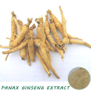 Panax Ginseng Extract 1% Ginsenosides pictures & photos