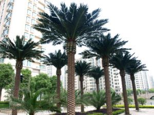 Outdoor Palm Tree