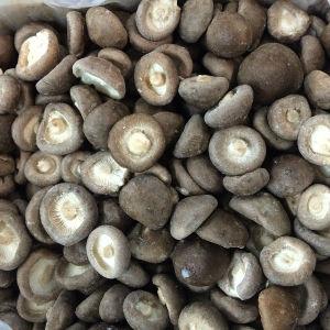 Wholesale Delicious Frozen Shiitake Mushroom