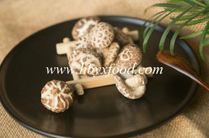 Nutritional Vegetable Dried Tea Flower Mushroom Producer pictures & photos