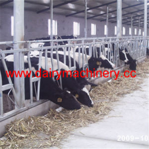 Farm Cow Headlock with Hot-Galvanized Steel Pipe pictures & photos