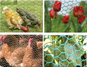 Sweden Hexagonal Wire Mesh Chicken Wire Netting China Anping Factory pictures & photos