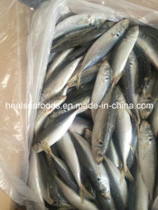 New Arrival Sea Frozen Fish Yellow Tail Scad pictures & photos
