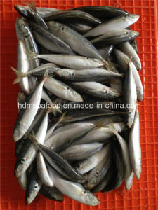 Good Quality Frozen Horse Mackerel Fish pictures & photos