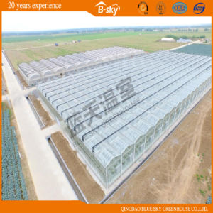 Beautiful Venlo Type Glass Greenhouse for Planting Vegetalbes&Fruits pictures & photos