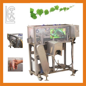 Automatic Fish Cutting Machine for Sale pictures & photos