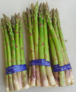 New Crop Top Quality Fresh Asparagus pictures & photos