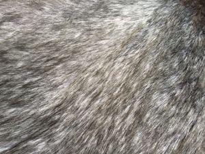 Long Pile Silve Fox Fake Fur pictures & photos