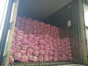 4cm up New Crop Garlic pictures & photos