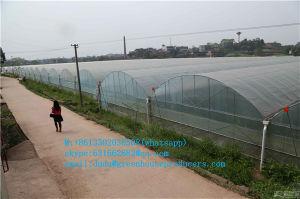 $ 6.45 USD/M2 Multi-Span Gothic Film Greenhouse FM-8m (HDG) pictures & photos