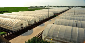 China Factory Price Hydroponic System PE Film Greenhouse pictures & photos