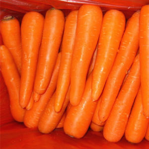 Shandong Fresh Carrot New Crop pictures & photos