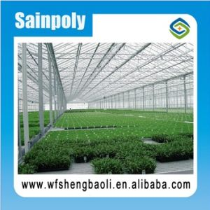 Sainpoly Hightransmissivity Low Cost Glass Greenhouse for Vegetable Growing pictures & photos