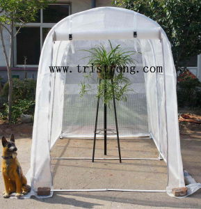 Flower House, Garden Tool, Garden Shed, Greenhouse (TSU-162G) pictures & photos