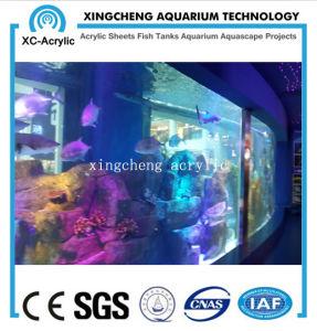 Large Transparent Acrylic Sheet Fish Tank pictures & photos