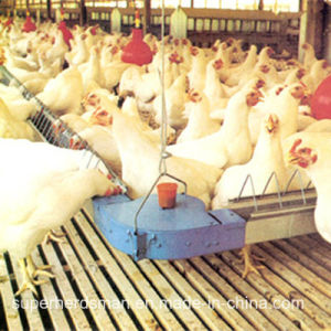 Automtic Chicken Farm Equipment for Breeder House pictures & photos