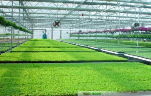 Polybonate Greenhouse with Reinforce Steel Frame for Agriculture or Gardening