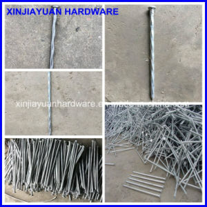 Galvanized Spiral Spike Nail 7′′ to 14′′ pictures & photos
