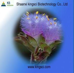 Cyanotis Arachnoidea Extract Ecdysterone 90% UV (KSSH20110024+)