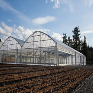 Factory Direct Film Thin Hole Plastic Greenhouse pictures & photos