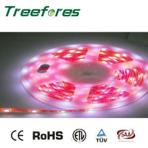 60LED 5050 SMD Waterproof LED Strip IP65 12V pictures & photos