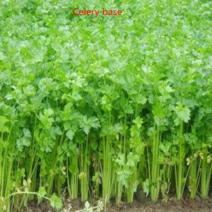 Dehydrated Celery Powder pictures & photos
