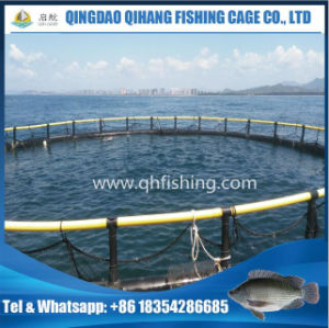 High Quality Fish Farming Net Cage for Snapper Breeding pictures & photos