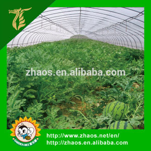 High Quality Plastic Film for Greenhouse pictures & photos