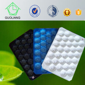 Canada&USA Popular Wholesale Plastic Tray for Fresh Tomato Packaging pictures & photos