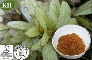Engelhardtia Roxburghiana Extract Astilbin 80% pictures & photos