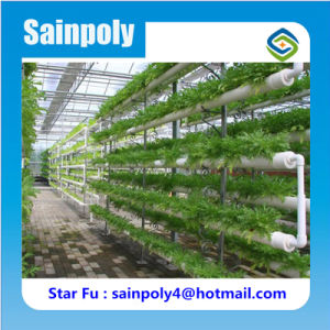 Easily Assembled Hot Sale Hydroponic Greenhouse for Agricultural pictures & photos
