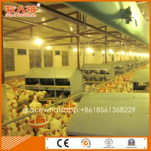 Poultry Control Shed Equipment for Breeder pictures & photos