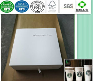 Food Grade Single Side PE Coated Paper in Rolls pictures & photos