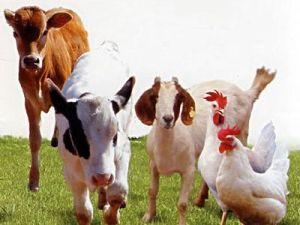 (Enrofloxacin Hydrochloride) -Veterinary Drugs Enrofloxacin Hydrochloride pictures & photos
