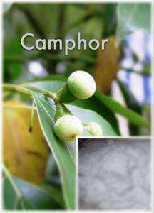 (Camphor) --- High Quality Camphor CAS: 76-22-2 Camphor pictures & photos