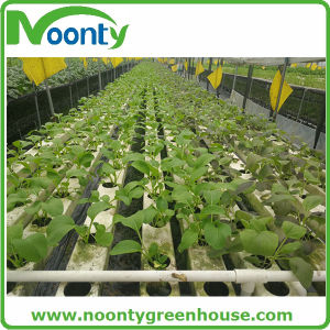Farm Nft Hydroponics System for Vegetable Growing pictures & photos