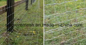 Sailin Galvanized Field Fence pictures & photos