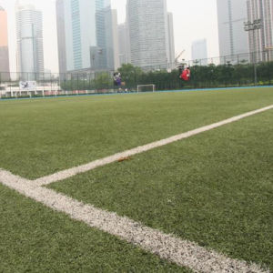 Residential Artifical Soccer Field Grass pictures & photos