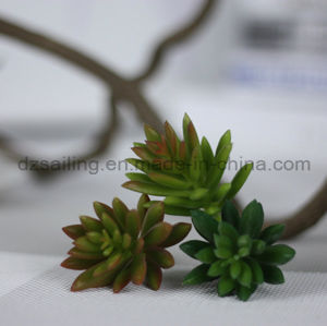 Decorative Plant Natural Touch Artificial Succulents Artificial Flower (SW17672) pictures & photos