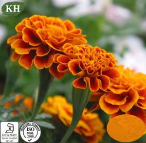 Marigold Extract 5%~60% Zeaxanthin; 5%-80% Lutein pictures & photos