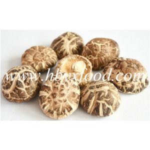 5-5.5cm Thick Flesh Dried Tea Flower Shiitake Mushroom