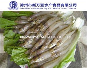 Frozen Silver Sillago Fish (Lady Fish)