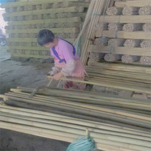 Dry Natural Bamboo Fence Panel pictures & photos