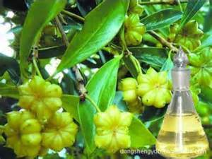 Wholesale Food Flavour Star Anise Essential Oil with 85% Anethole pictures & photos