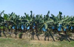 PP Non Woven Fabric for Banana Bag pictures & photos