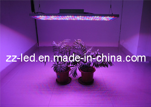 12/24/36/48 Inch LED Grow Light (ZI4SSR060)