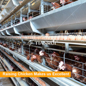 Tianrui Design Hot DIP Galvanized Steel H Frame Automatic Battery Chicken Layer Cages for Sale pictures & photos