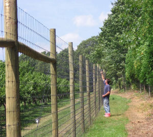 Economical Deer Exclusion Fencing pictures & photos