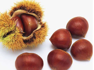 Fresh Chinese Chestnuts pictures & photos