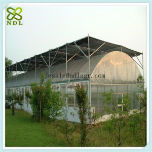 Agricultural Hydroponic Systems   Film Greenhouse pictures & photos